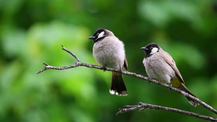 Birds Scientific Name