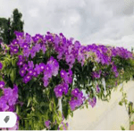 flowers name