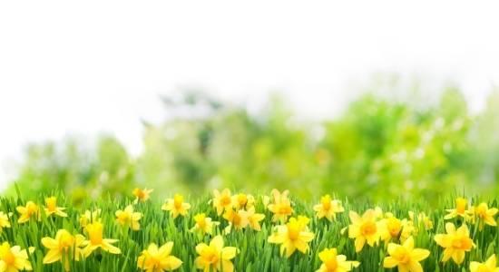 आयुर्वेद अनुसार वसंत ऋतुचर्या