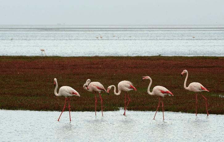 State Birds of Gujarat