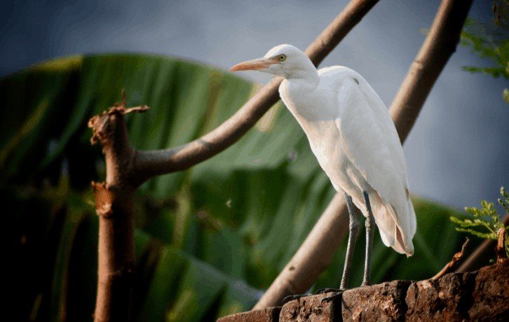 State Birds of Jharkhand