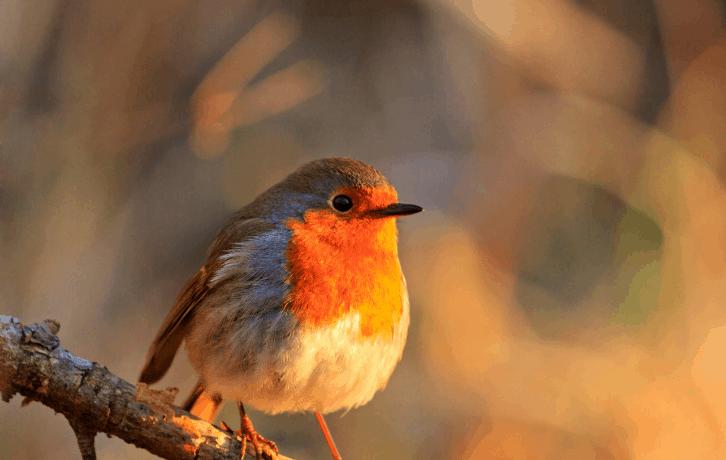 State Birds of Madhya Pradesh