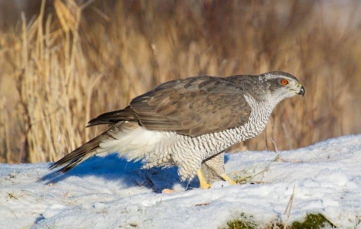 State Birds of Punjab