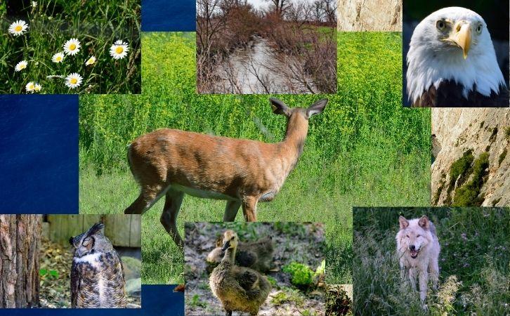 List of Wildlife Sanctuary in India in Hindi | भारत में वन्यजीव अभ्यारण्य की सूची राज्यवार | Smallest, Largest, First Wildlife Sanctuary